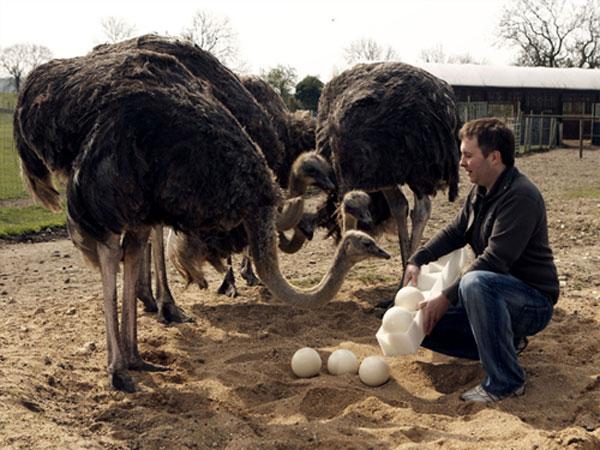 Pak Arabian Ostrich Company 2011